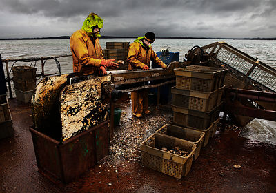 Oyster harvesting barge, Poole Harbour, U.K.