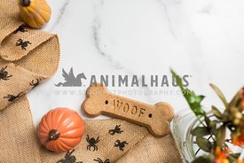 Fall flat lay with pumpkins, garland and a dog bone treat