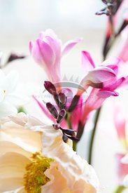 Spring Flowers by Habben