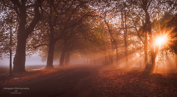 Path of Autumn Light