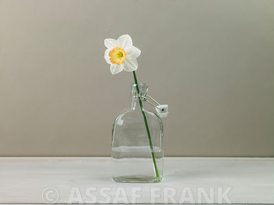 Daffodil flower in a glass bottle