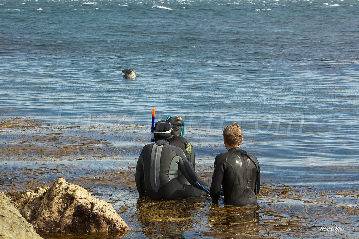 Snorkelers and seal on Lundy island.