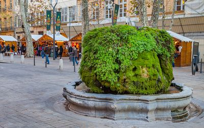 Fontaine moussue sur le cours Mirabeau / Mossy fountain on the Mirabeau avenue