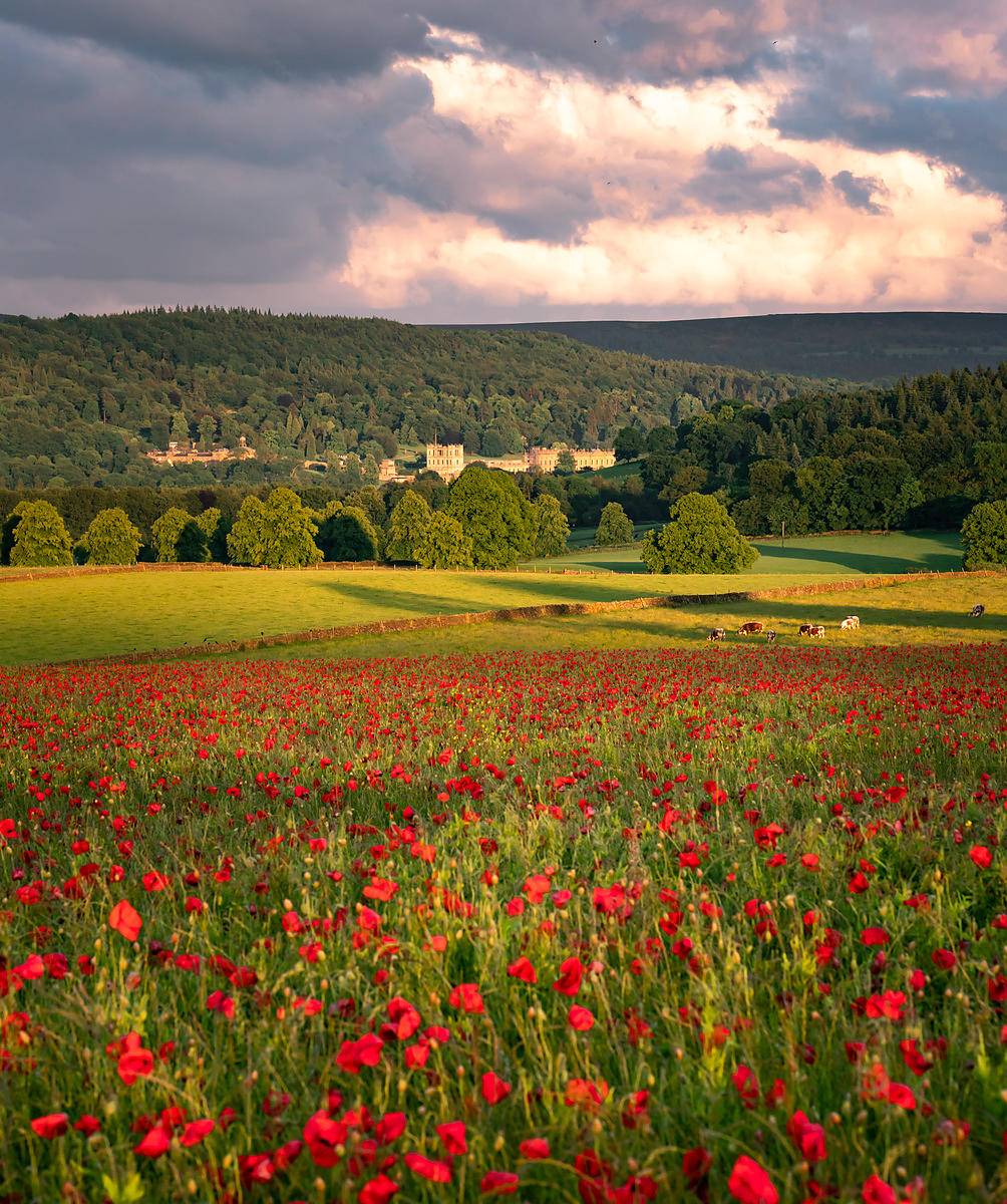 Chatsworth House from the poppy field