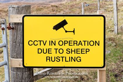 Image - CCTV in operation due to sheep rustling sign