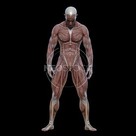 cg-body-pack-male-muscle-map-neostock-19
