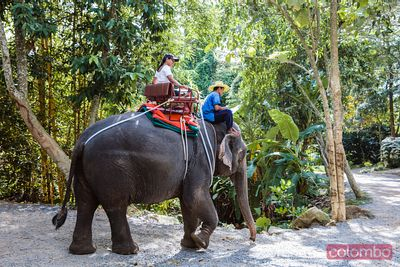 Woman riding an elephant, Ko Samui, Thailand