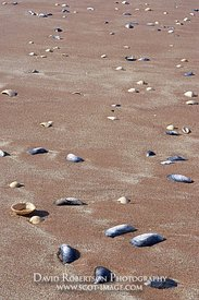 Image - Shells on sandy beach, Grunaird Bay, Wester Ross, Highland, Scotland