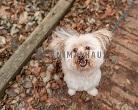 A small cream dog sitting on an autumn path