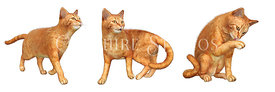 Orange Tabby Marmelade Cats