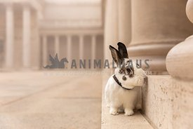 A rabbit in a classical courtyard