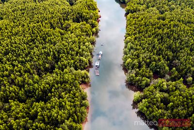 Aerial view of river amidst mangroves, Phang Nga bay, Thailand