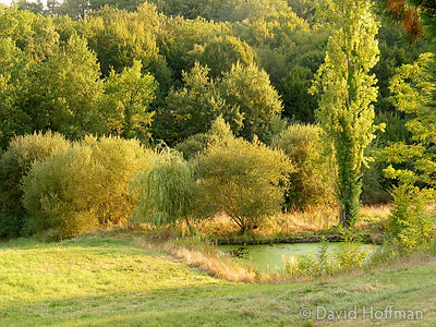 Ressegue Pond 2_0704 Algae covered pond in woodland at La Ressegue, Bergerac, France. 2003.