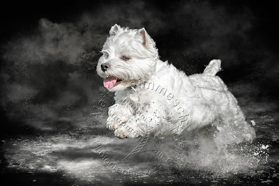 Art-Digital-Alain-Thimmesch-Chien-955