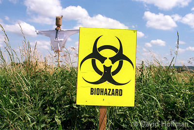 Biohazard symbol placed by protesters next to a field trial of GM Oilseed Rape planted by AgrEvo, Watlington, Oxfordshire.