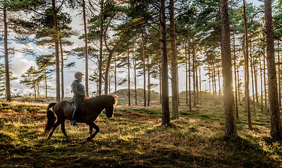 Woman riding horse in Thy, Denmark 7