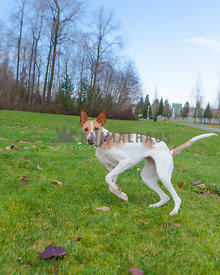dog runing two legs in the air