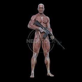cg-body-pack-male-muscle-map-neostock-11