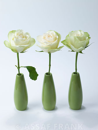 Three roses in vases