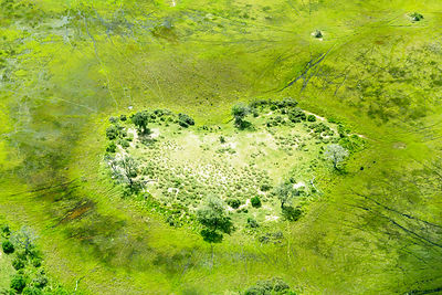 Heart of the Okavango
