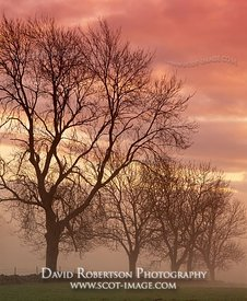 Image - Trees at dawn