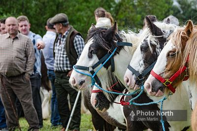 ROMANY 15A - Appleby Horse Fair