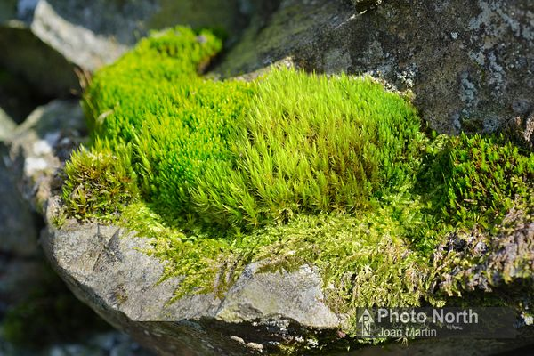 MOSS 50A - Assorted mosses on a wall