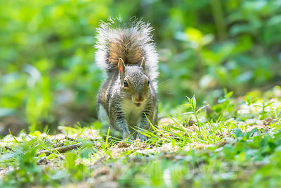 Happy squirel on forest floor.