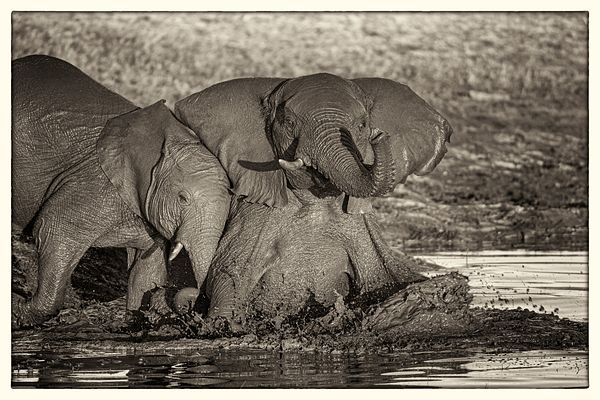 Elephant Bath Zimbabwe 2017: Photographer Neil Emmerson