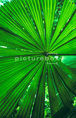 An abstract green leaf background image