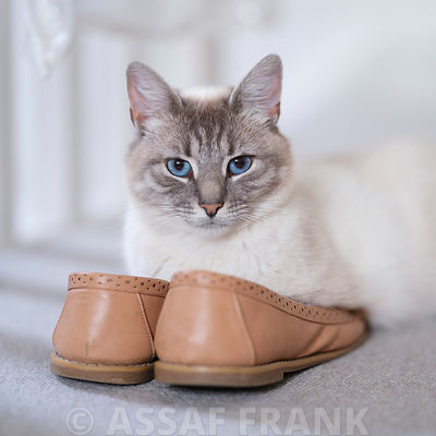 Cat on Shoes