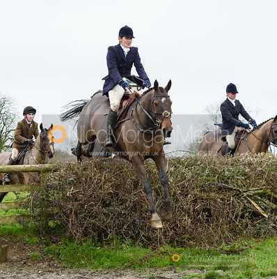 Jumping a hedge near Leicester Lane. The Cottesmore and Fernie Hunts at Hill Top 10/12