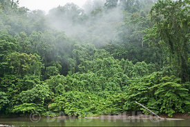Ravo River and forest Nara on Makira (San Cristobal) Solomon Islands, South Pacific