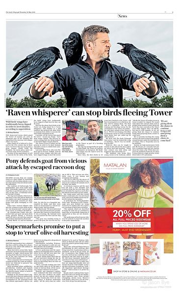 daily_telegraph_ravens_page_3