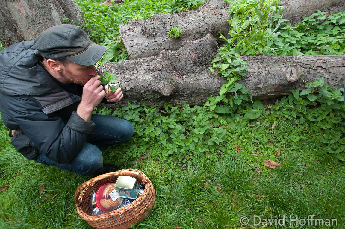 130915 Clissold Foraging 42