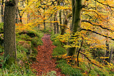 Path through the autumn wood