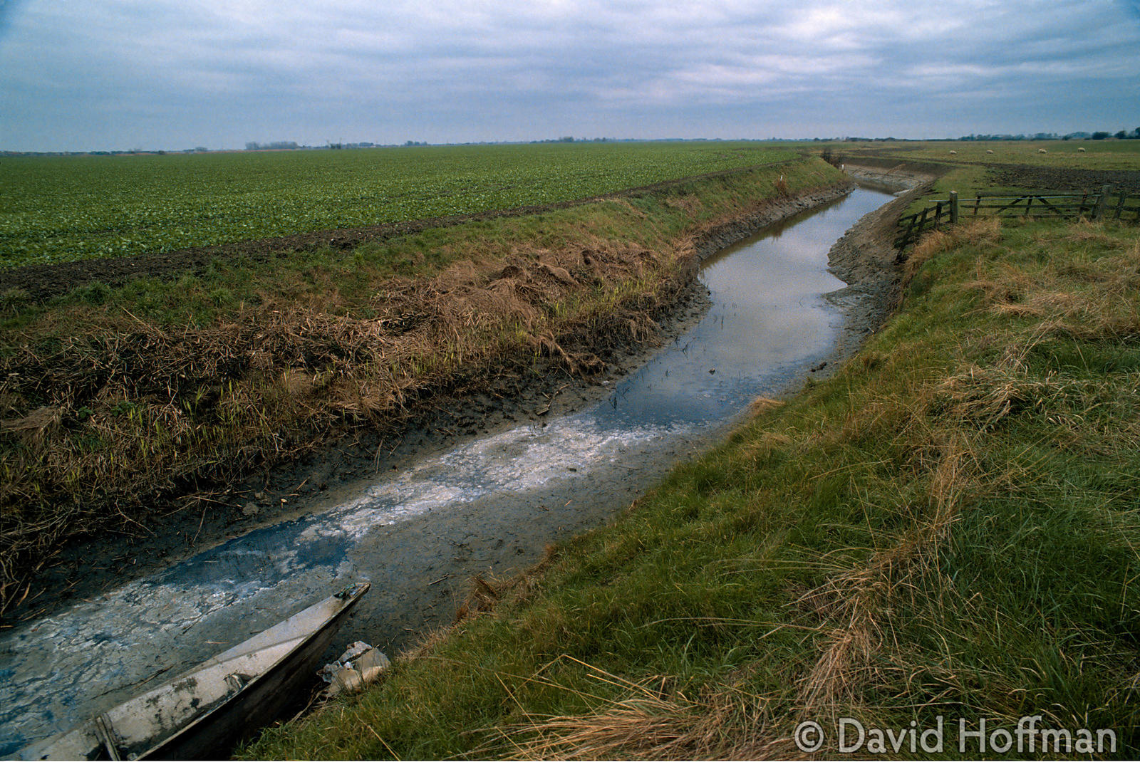 Romney marsh, Kent.Standing water in this drainage ditch is completely covered by algae. Romney marsh, Kent. Standing water i...