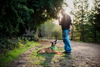 A malinois laying at his dad's feet with a frisbee