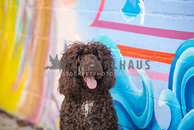 close up of dark brown doodle in front of colorful mural