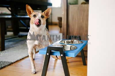A dog licking his lips while next to some elevated food bowls