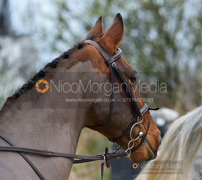 At the meet. The Belvoir Hunt at Long Clawson 21/1