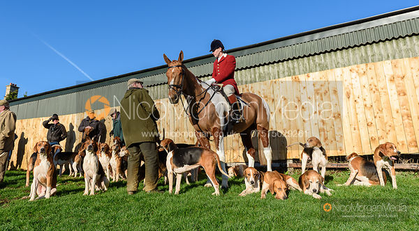 Dan Cherriman and the Pytchley hounds at the meet. The Pytchley Hounds visit the Cottesmore at Town Park Farm 15/1