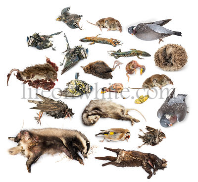 Composition of dead animals in state of decomposition, isolated on white
