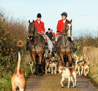Hounds arrive at the meet. The Belvoir Hunt at Holwell 7/12