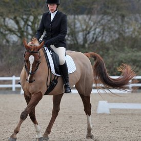 26/01/2019 - Unaffiliated dressage - Brook Farm training centre