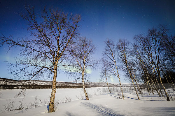 Faint aurora behind trees in a moonlit landscape in Utsjoki in Finnish Lapland