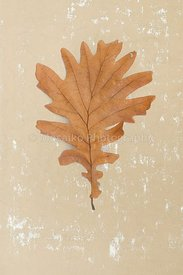 isolated_leaf_002