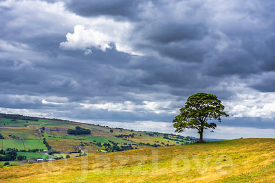 Cloudy sky over field with one tree.
