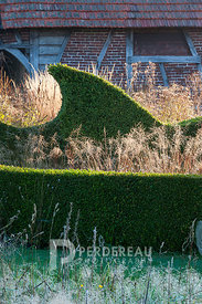 Wavy clipped buxus hedge