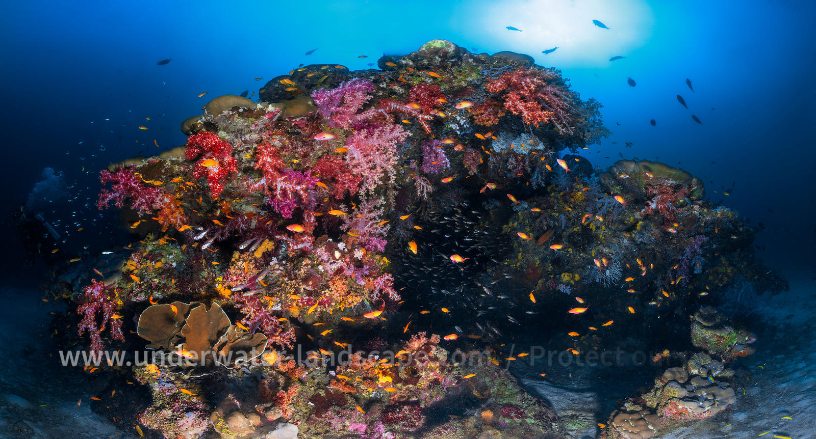 Similan underwater Panoramic